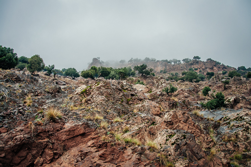 Marrakesh landscape